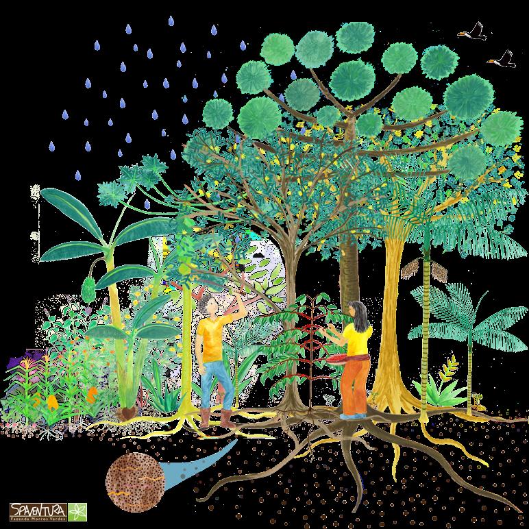 agrofloresta logo 772
