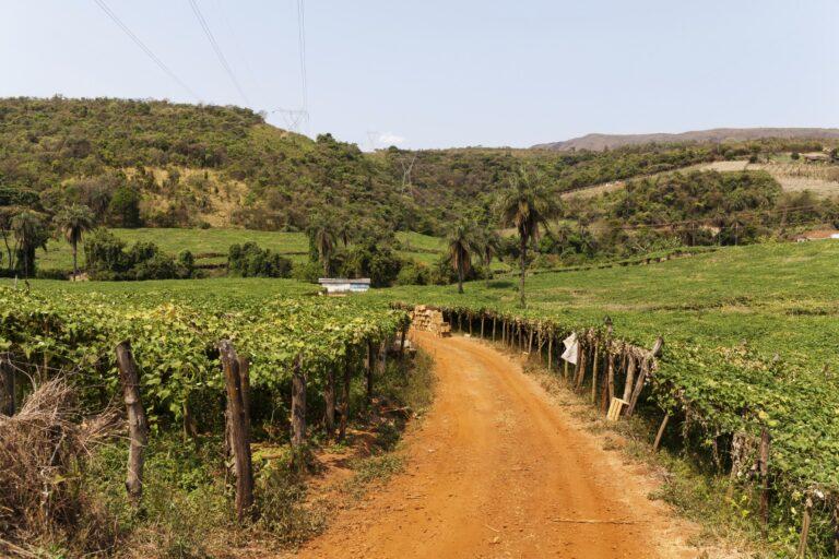 brazilfarmland